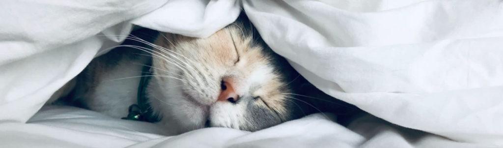 Good Sleep Aids Productivity
